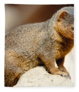 Mongoose Fleece Blanket