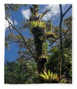 Montagne D'ambre National Park Madagascar 4 Fleece Blanket