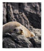 Montague Island Seal Fleece Blanket