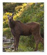 Moose Baby Sniffing Morning Air Fleece Blanket