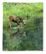 Moose Calf Testing The Water Fleece Blanket