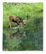 Moose Calf Testing The Water Fleece Blanket