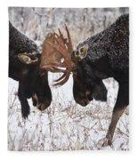 Moose Fighting, Gaspesie National Park Fleece Blanket
