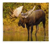Moose In Glacial Kettle Pond  Fleece Blanket