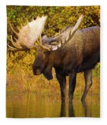 Moose In Glacial Kettle Pond  Fleece Blanket