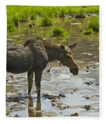 Moose Fleece Blanket