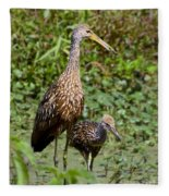 Mother Limpkin And Colt Fleece Blanket