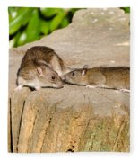 Mother Rat With Youngster Fleece Blanket