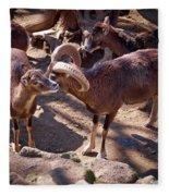 Mouflon Fleece Blanket