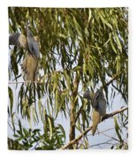 Mourning Doves Landing In Eucalyptus  Fleece Blanket