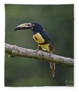Mr. Colorful.. Fleece Blanket