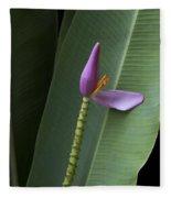 Musa Ornata - Pink Ornamental Banana Flower - Kepaniwai Maui Hawaii  Fleece Blanket