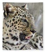 Naples Zoo - Leopard Relaxing 1 Fleece Blanket