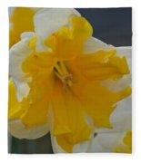 Narcissus 014-1 Fleece Blanket