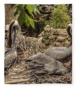Nesting Brown Pelicans Fleece Blanket