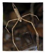 Net-casting Spider Fleece Blanket