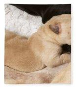 Newborn Labrador Puppy Suckling Fleece Blanket