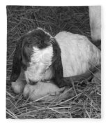 Newborn Fleece Blanket