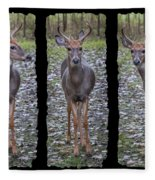 Curious Yearling Deer Fleece Blanket