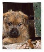 Norfolk Terrier Puppy By Barn Door Fleece Blanket