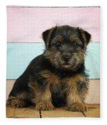 Norfolk Terrier Puppy Dog, Sitting Fleece Blanket