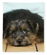 Norfolk Terrier Puppy Fleece Blanket