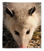 North American Opossum In Winter Fleece Blanket