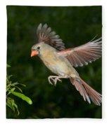 Northern Cardinal Hen Fleece Blanket