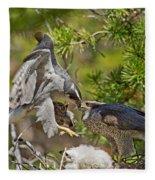 Northern Goshawk Brings Prey To Nest Fleece Blanket