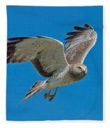 Northern Harrier Male In Flight Fleece Blanket