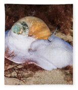 Northern Moon Snail Fleece Blanket