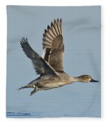 Northern Pintail Hen Fleece Blanket