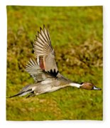 Northern Pintail In Flight Fleece Blanket