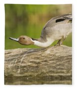 Northern Pintail  Fleece Blanket