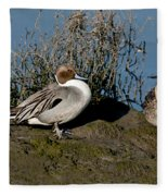 Northern Pintail Pair At Rest Fleece Blanket