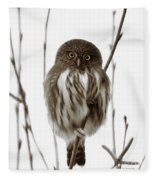 Northern Pygmy Owl - Little One Fleece Blanket