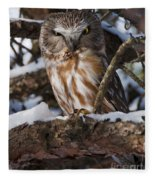 Northern Saw-whet Owl.. Fleece Blanket