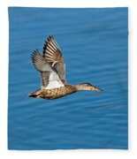 Northern Shoveler In Flight Fleece Blanket