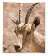 Nubian Ibex Capra Ibex Nubiana 1 Fleece Blanket