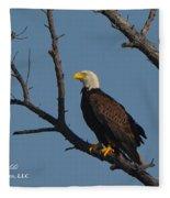 Nw Florida Bald Eagle Iv Fleece Blanket