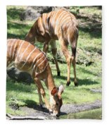 Nyalas At The Watering Hole Fleece Blanket