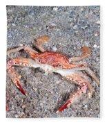 Ocellate Swimming Crab Fleece Blanket