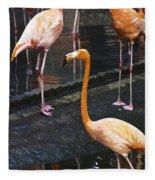 Oil Painting - Focus On A Single Flamingo Inside The Jurong Bird Park Fleece Blanket