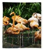 Oil Painting - Number Of Flamingos Inside The Jurong Bird Park Fleece Blanket