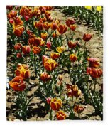 Oil Painting - Red And Yellow Tulips Inside The Tulip Garden In Srinagar Fleece Blanket