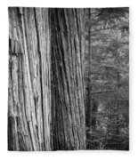 Old Growth Cedars Glacier National Park Bw Fleece Blanket