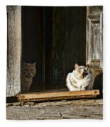Old Knox Church Cats Fleece Blanket