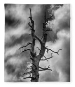 Old Trees Reach For The Sky Fleece Blanket