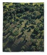 Olive Farmland In Spain Fleece Blanket