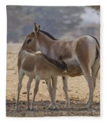 Onager Equus Hemionus 2 Fleece Blanket